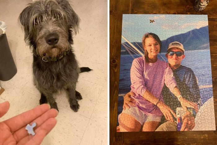 34 fotos de cachorro para o desafio Guilty Dog 7