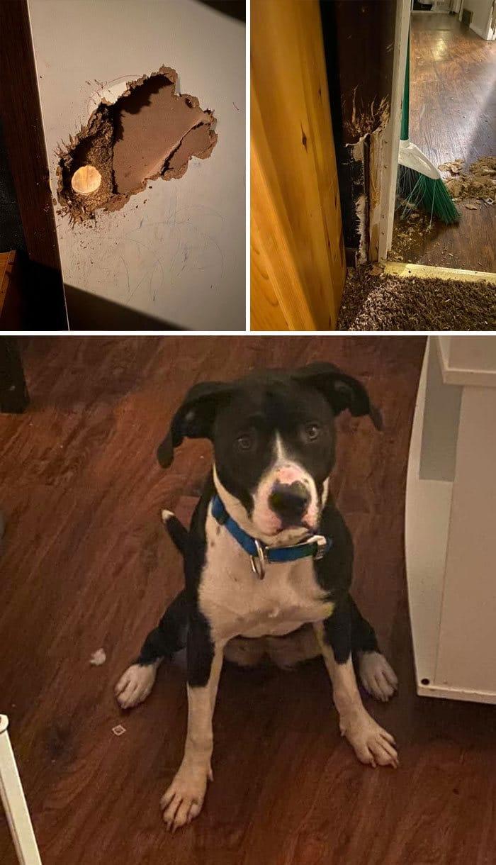 34 fotos de cachorro para o desafio Guilty Dog 8