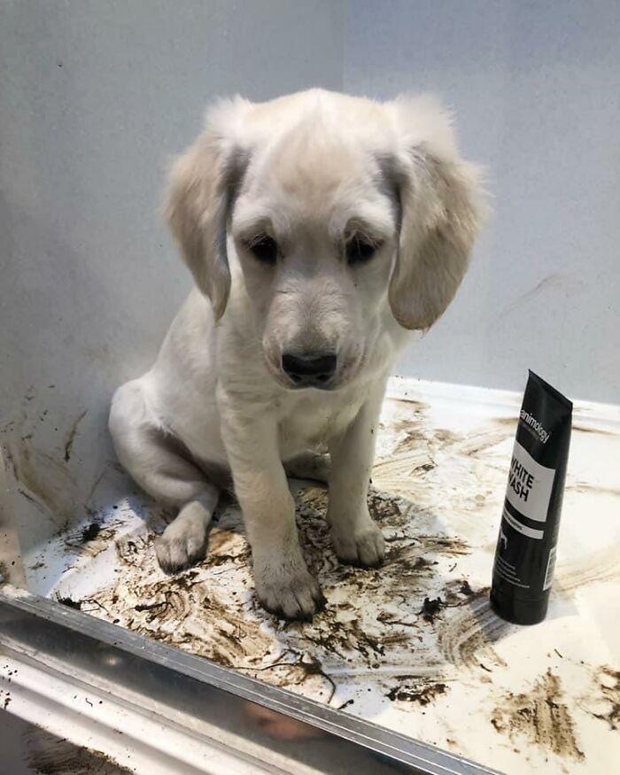 34 fotos de cachorro para o desafio Guilty Dog 14