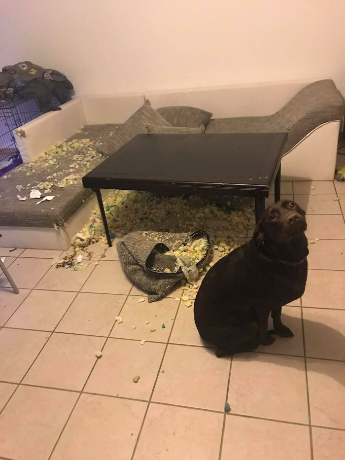34 fotos de cachorro para o desafio Guilty Dog 15