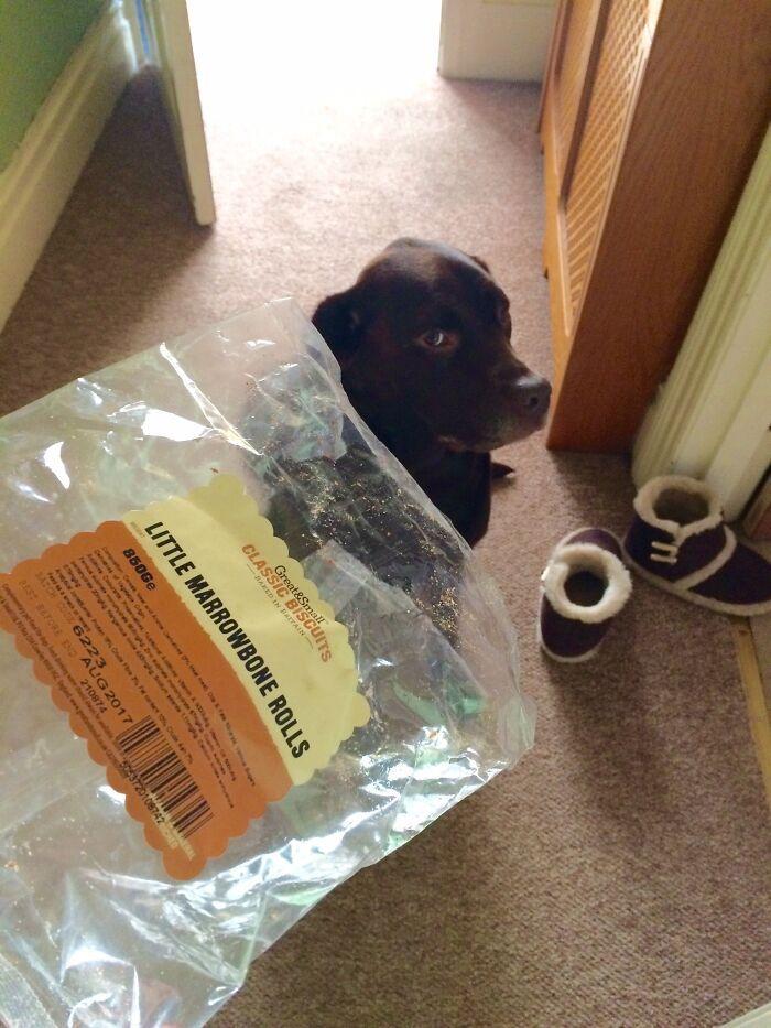 34 fotos de cachorro para o desafio Guilty Dog 20