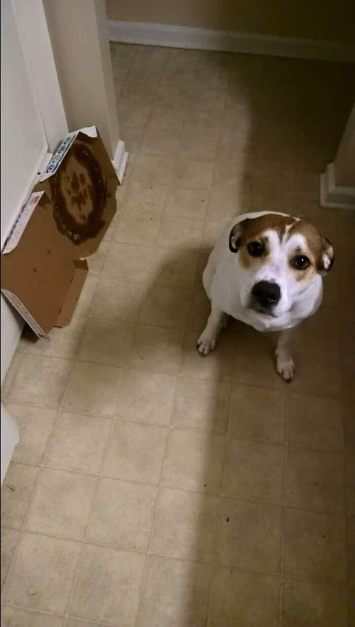34 fotos de cachorro para o desafio Guilty Dog 21