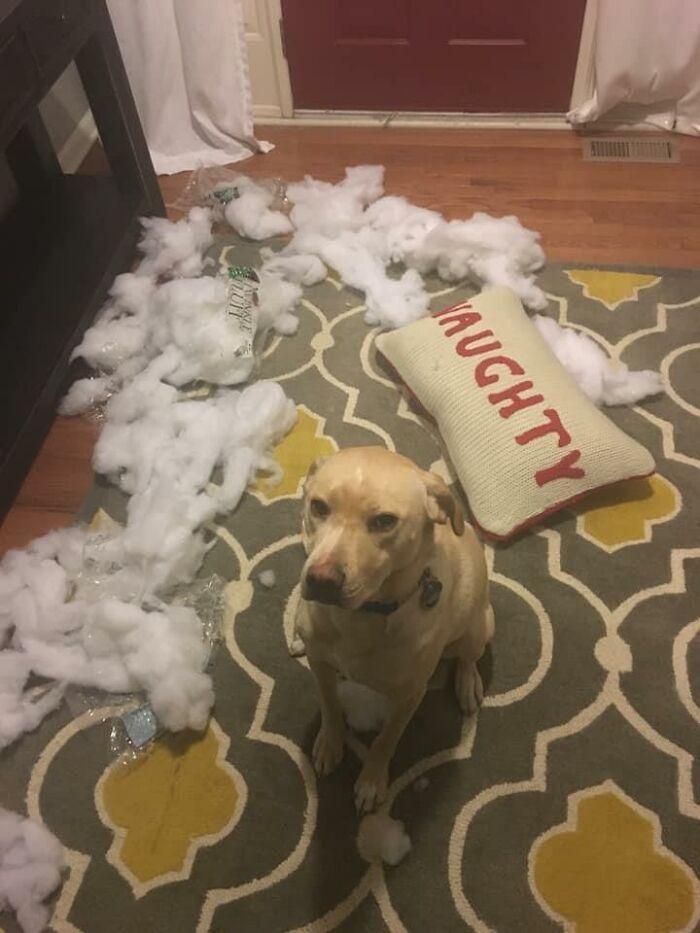 34 fotos de cachorro para o desafio Guilty Dog 23