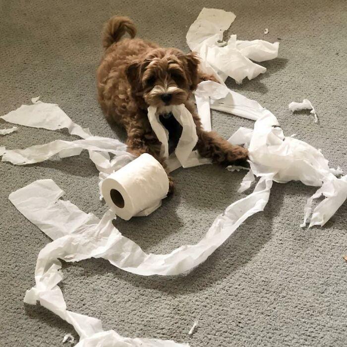 34 fotos de cachorro para o desafio Guilty Dog 25