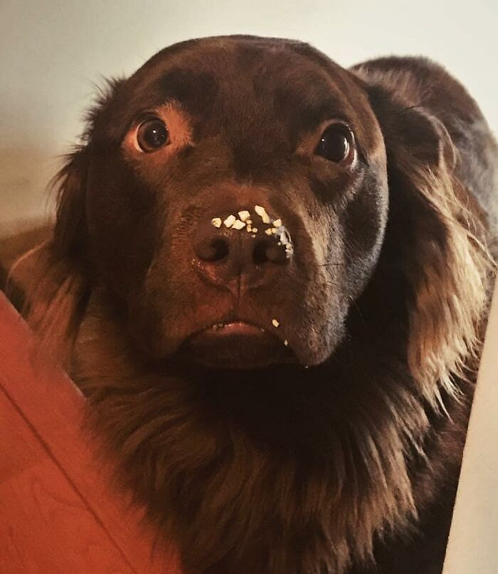 34 fotos de cachorro para o desafio Guilty Dog 28