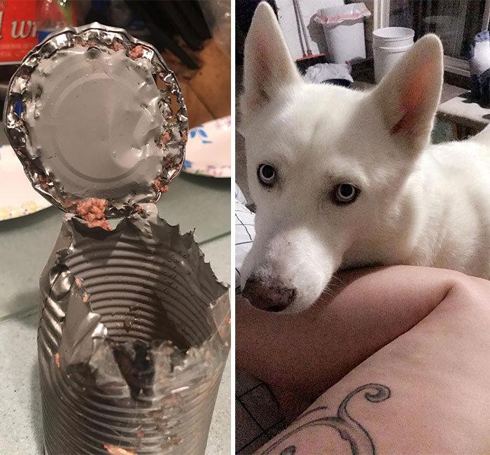 34 fotos de cachorro para o desafio Guilty Dog 29