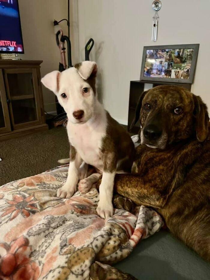 34 fotos de cachorro para o desafio Guilty Dog 33