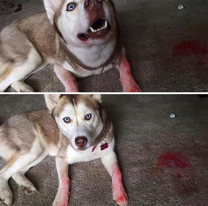 34 fotos de cachorro para o desafio Guilty Dog 34