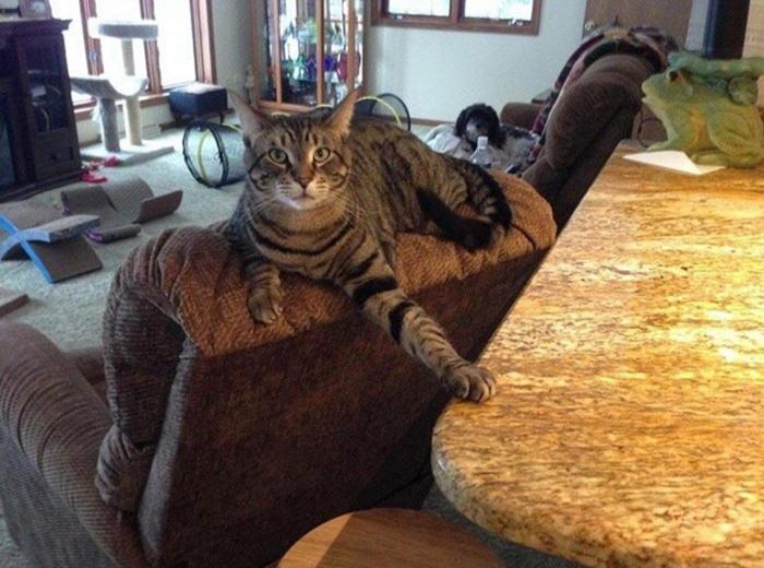 30 fotos hilárias que provam que os gatos são os maiores idiotas 2