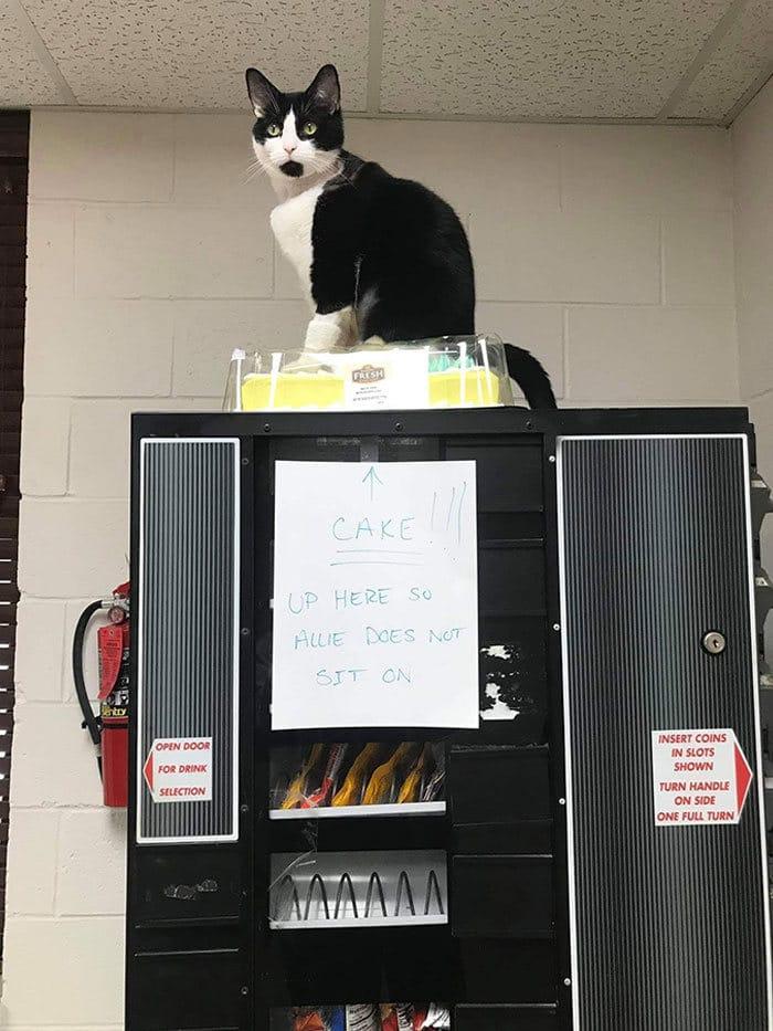 30 fotos hilárias que provam que os gatos são os maiores idiotas 6