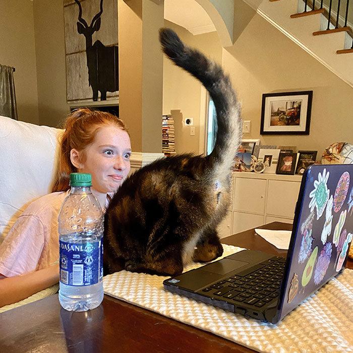 30 fotos hilárias que provam que os gatos são os maiores idiotas 8
