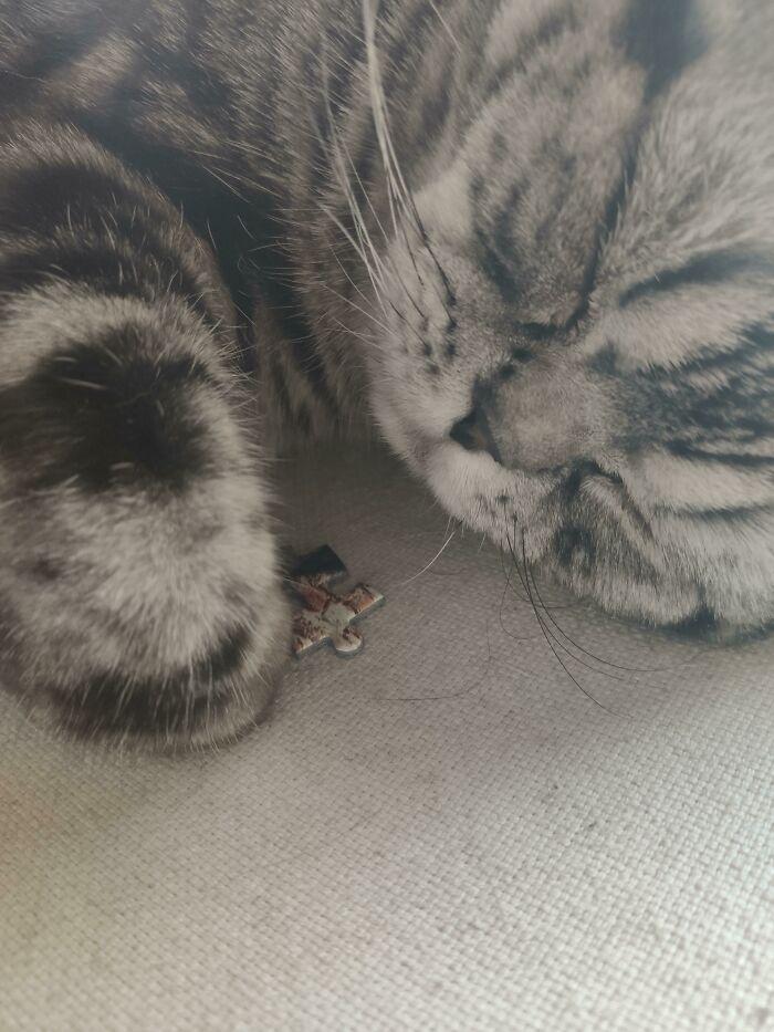 30 fotos hilárias que provam que os gatos são os maiores idiotas 9