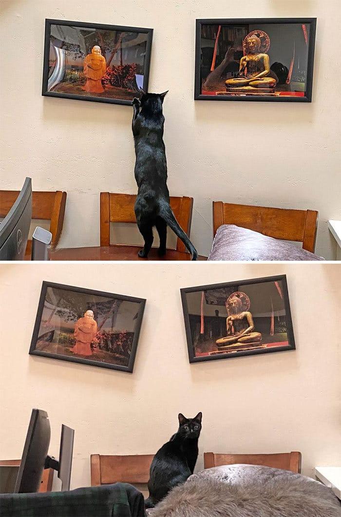 30 fotos hilárias que provam que os gatos são os maiores idiotas 13