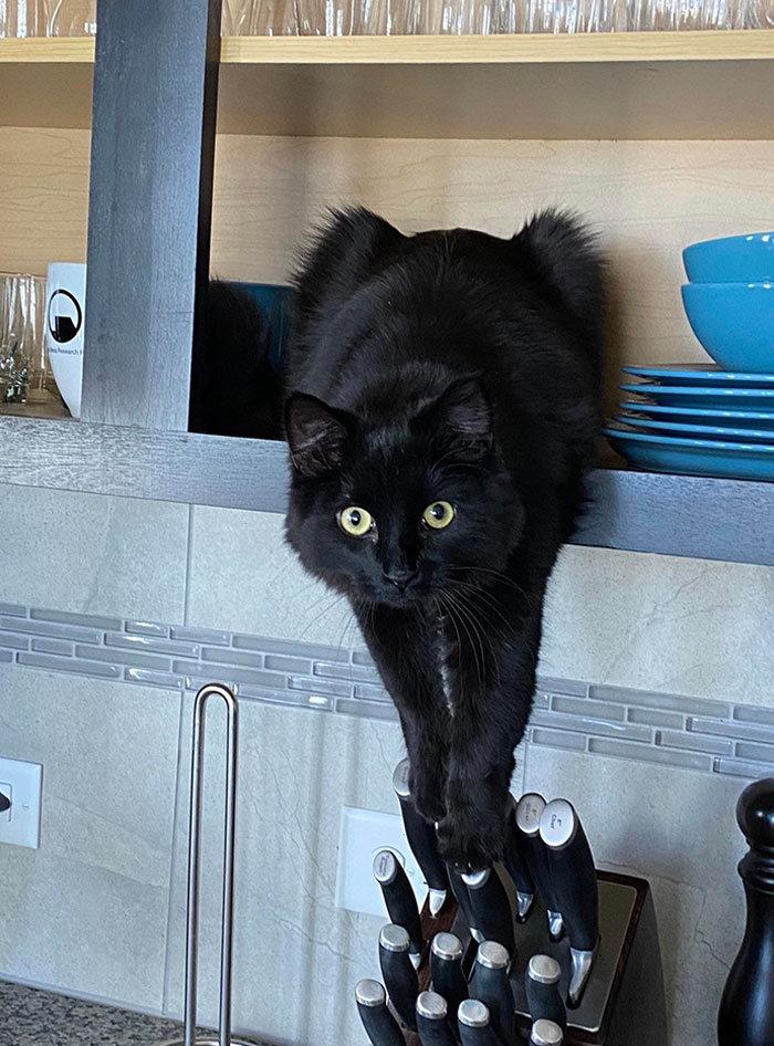 30 fotos hilárias que provam que os gatos são os maiores idiotas 18