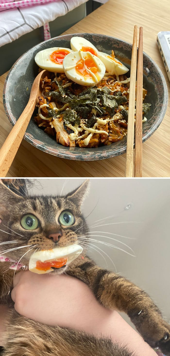 30 fotos hilárias que provam que os gatos são os maiores idiotas 19