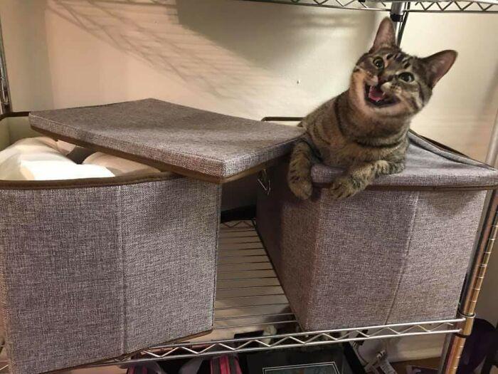 30 fotos hilárias que provam que os gatos são os maiores idiotas 20