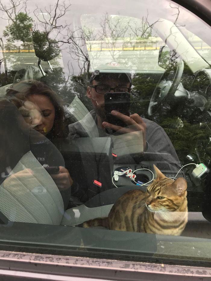 30 fotos hilárias que provam que os gatos são os maiores idiotas 22