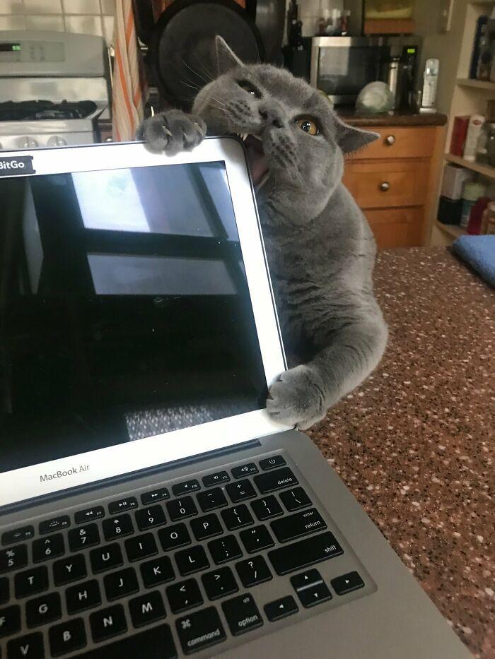 30 fotos hilárias que provam que os gatos são os maiores idiotas 23