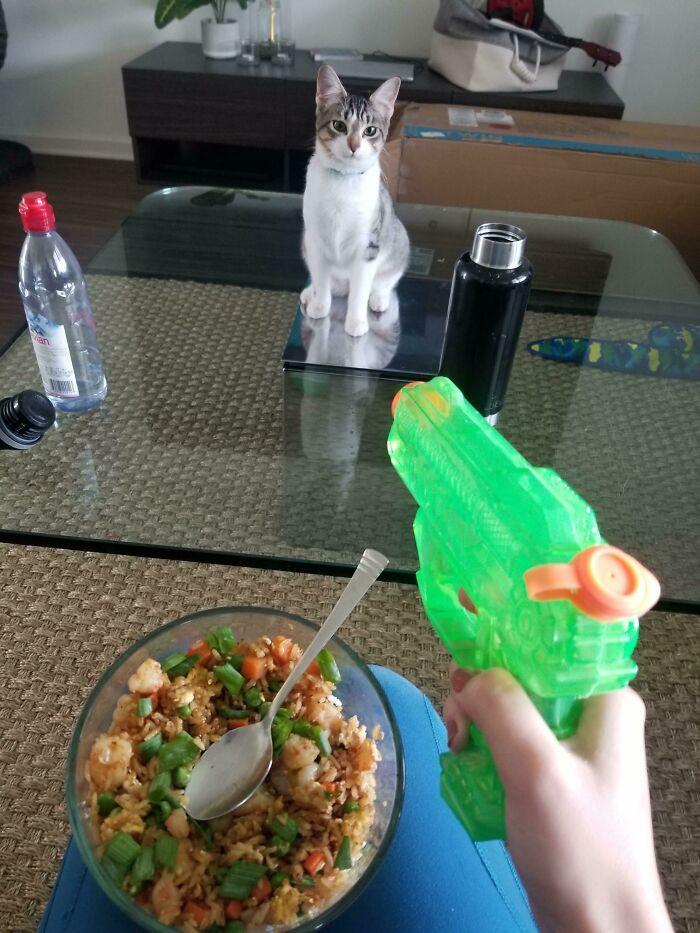 30 fotos hilárias que provam que os gatos são os maiores idiotas 25