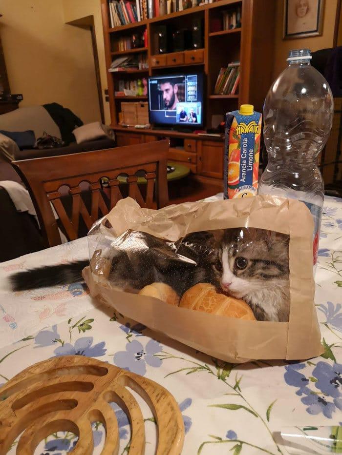 30 fotos hilárias que provam que os gatos são os maiores idiotas 26