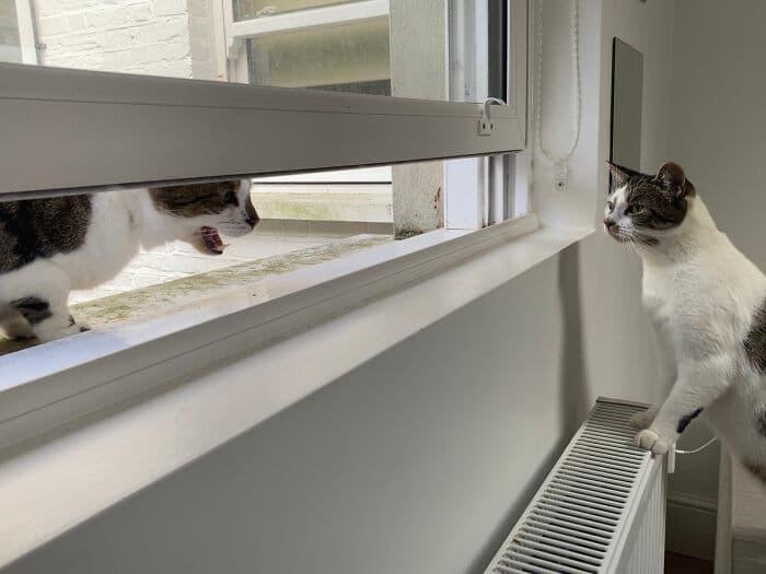 30 fotos hilárias que provam que os gatos são os maiores idiotas 27