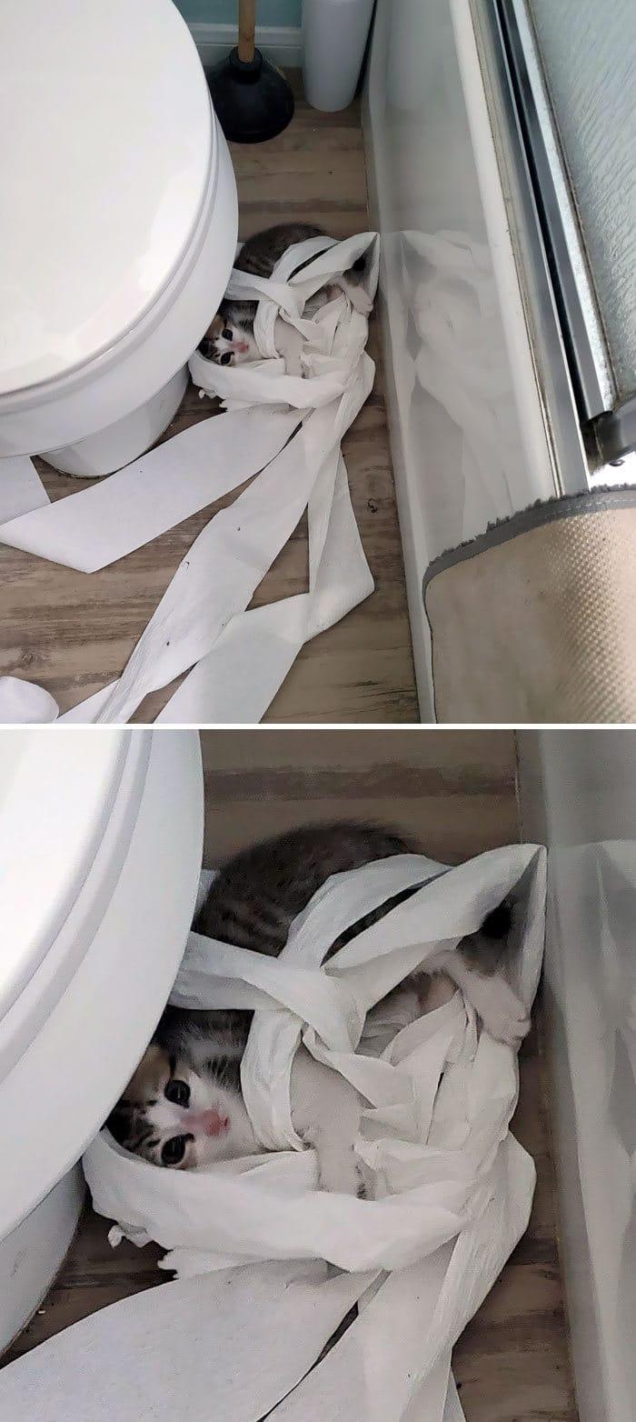30 fotos hilárias que provam que os gatos são os maiores idiotas 29