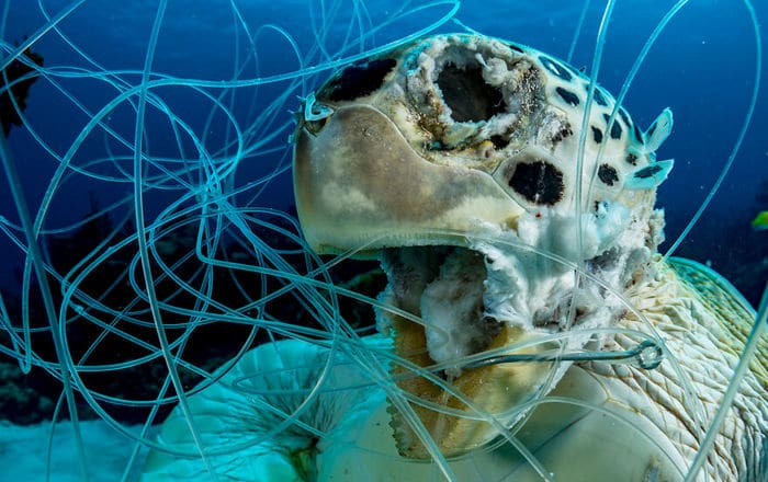 34 fotos incríveis do Ocean Photography Awards 2020 4