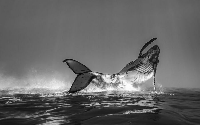 34 fotos incríveis do Ocean Photography Awards 2020 34