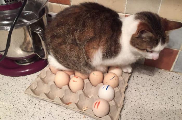 42 gatos que preferem dormir em qualquer outro lugar do que em suas camas 7