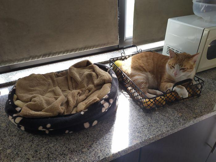 42 gatos que preferem dormir em qualquer outro lugar do que em suas camas 11