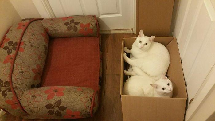 42 gatos que preferem dormir em qualquer outro lugar do que em suas camas 12