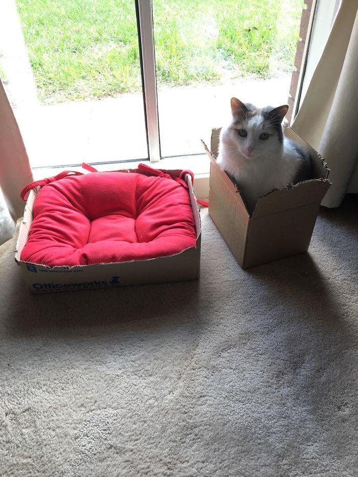 42 gatos que preferem dormir em qualquer outro lugar do que em suas camas 13
