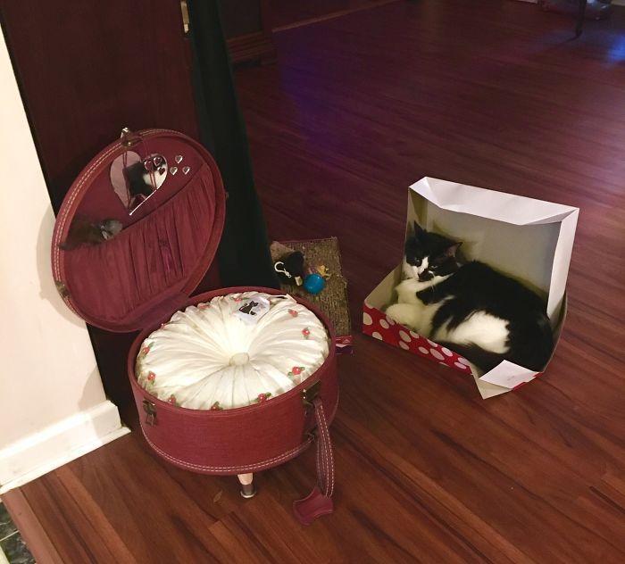 42 gatos que preferem dormir em qualquer outro lugar do que em suas camas 14