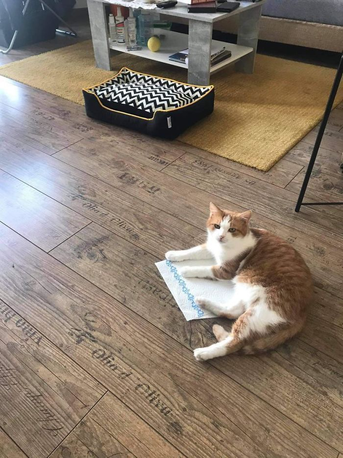 42 gatos que preferem dormir em qualquer outro lugar do que em suas camas 16