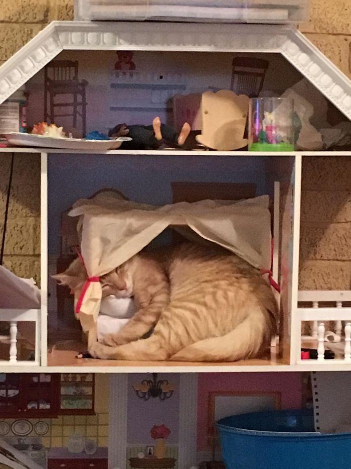 42 gatos que preferem dormir em qualquer outro lugar do que em suas camas 17