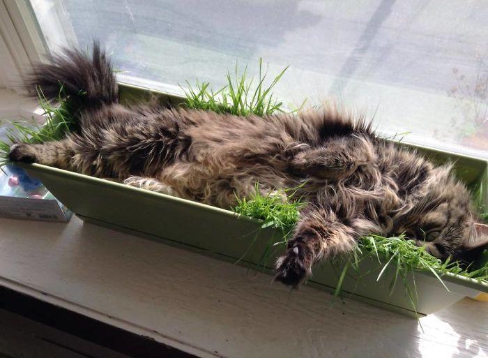 42 gatos que preferem dormir em qualquer outro lugar do que em suas camas 18