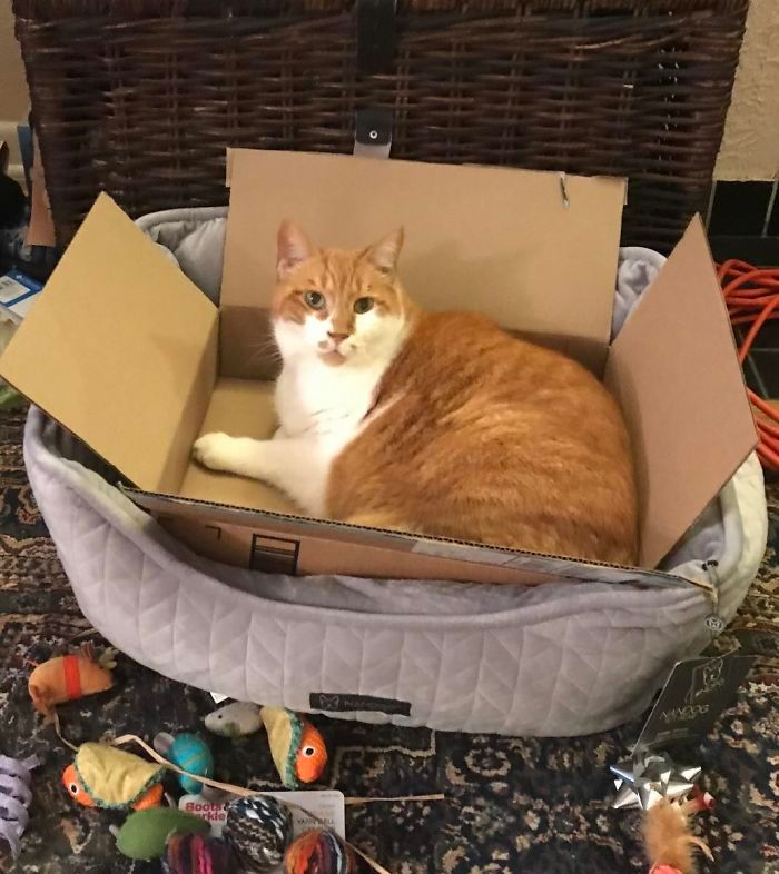 42 gatos que preferem dormir em qualquer outro lugar do que em suas camas 20