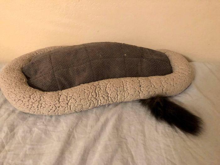 42 gatos que preferem dormir em qualquer outro lugar do que em suas camas 21