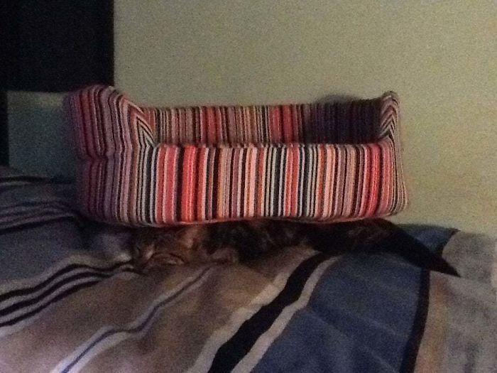42 gatos que preferem dormir em qualquer outro lugar do que em suas camas 22