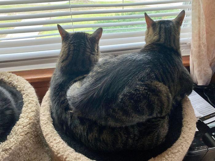 42 gatos que preferem dormir em qualquer outro lugar do que em suas camas 23