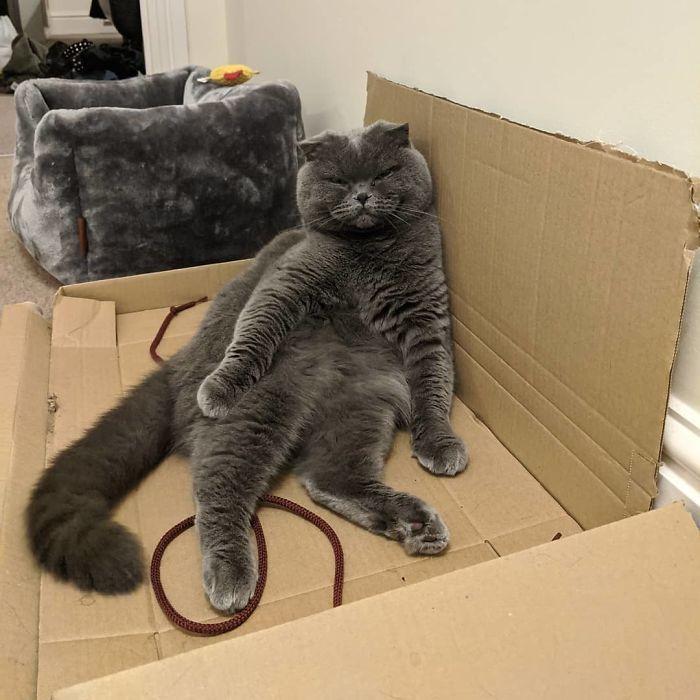 42 gatos que preferem dormir em qualquer outro lugar do que em suas camas 24