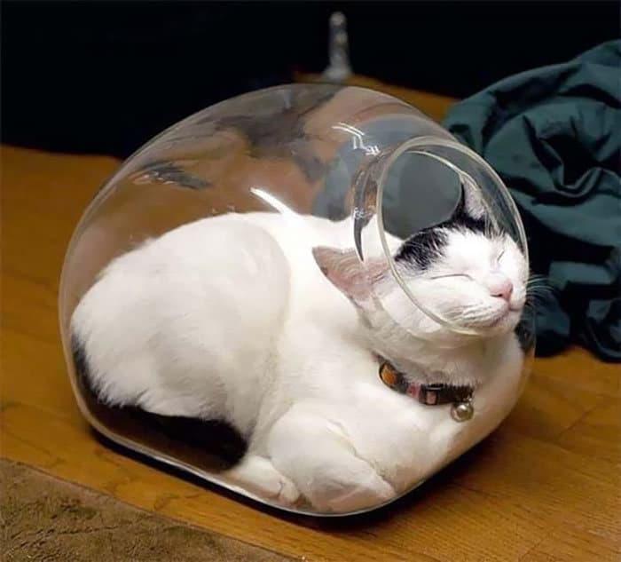 42 gatos que preferem dormir em qualquer outro lugar do que em suas camas 25