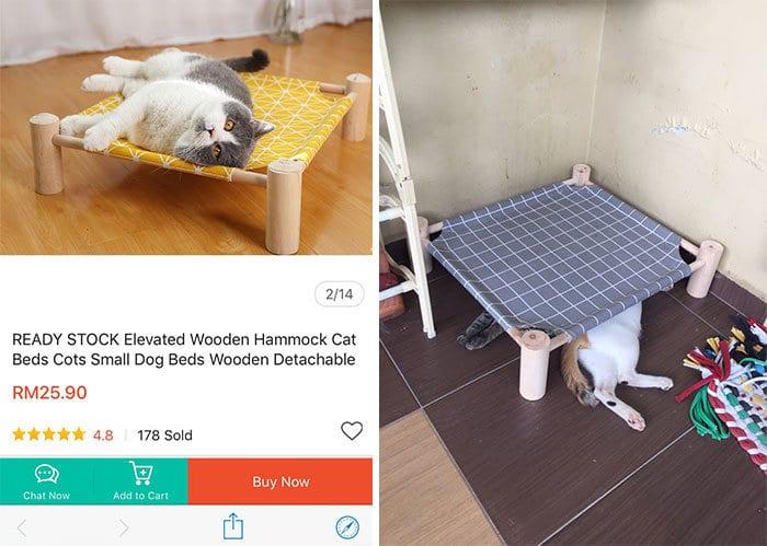 42 gatos que preferem dormir em qualquer outro lugar do que em suas camas 26