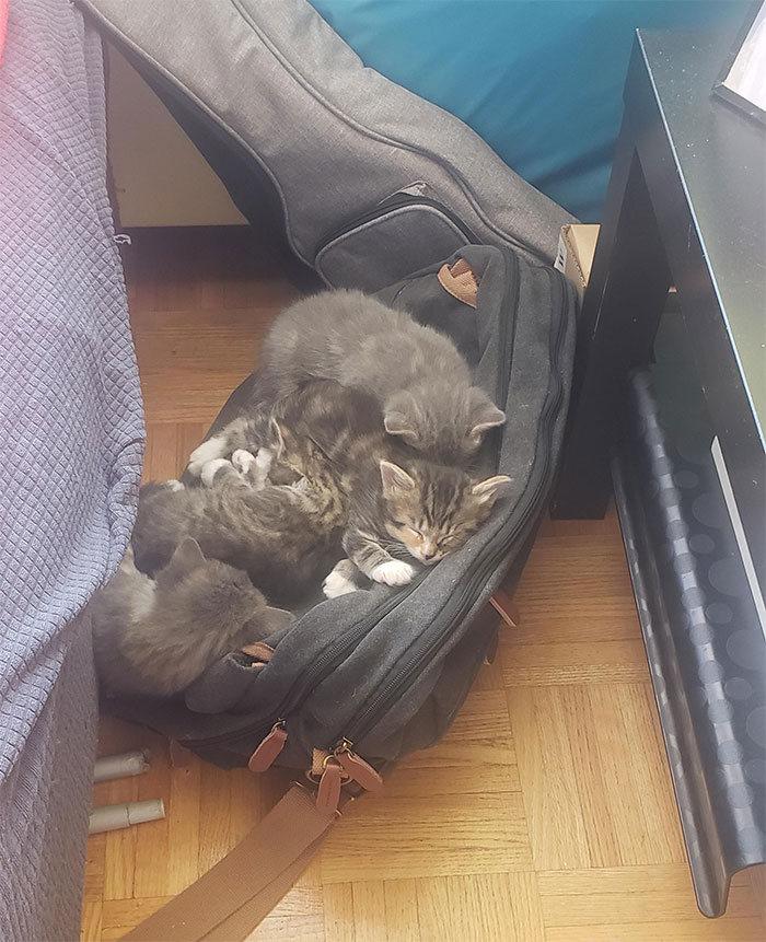 42 gatos que preferem dormir em qualquer outro lugar do que em suas camas 28