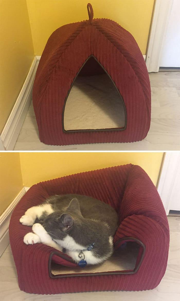 42 gatos que preferem dormir em qualquer outro lugar do que em suas camas 29