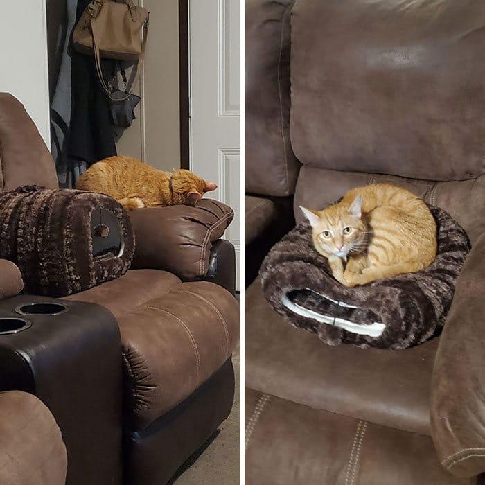 42 gatos que preferem dormir em qualquer outro lugar do que em suas camas 31