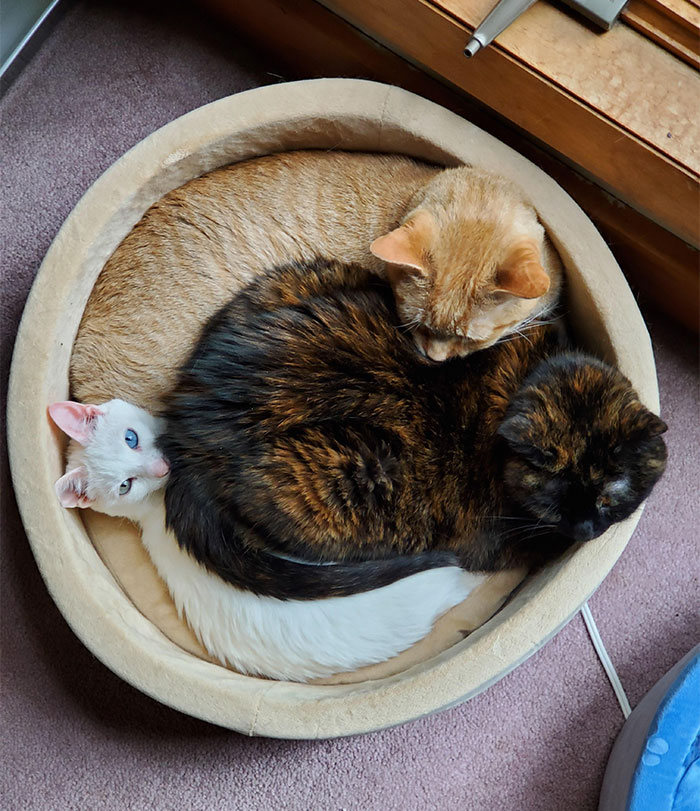 42 gatos que preferem dormir em qualquer outro lugar do que em suas camas 32