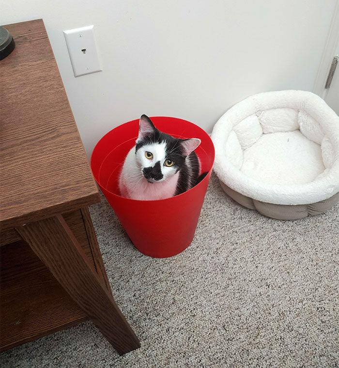 42 gatos que preferem dormir em qualquer outro lugar do que em suas camas 33