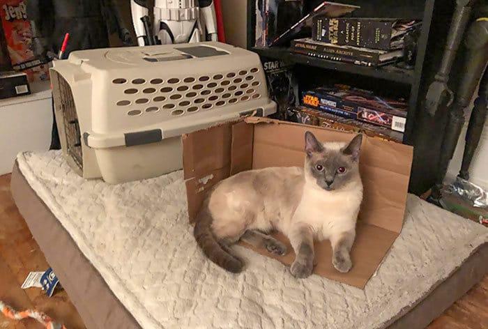 42 gatos que preferem dormir em qualquer outro lugar do que em suas camas 35