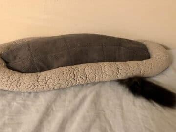 42 gatos que preferem dormir em qualquer outro lugar do que em suas camas 6